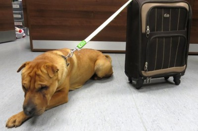 Abandoned Dog Is Found Sitting Alone At Train Station, Tied To A Case Full Of His Belongings