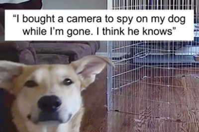 20 Funny And Adorable Dog Snapchat That Will Brighten Up Your Day